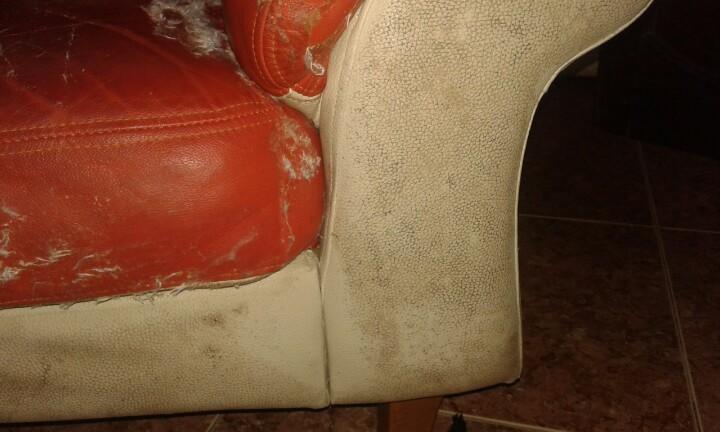 Không chỉ đệm ghế mà phần chân ghế cũng bị bẩn và mốc