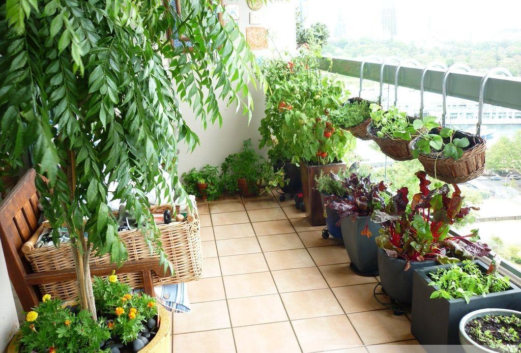 Trồng cây cảnh xen lẫn rau ăn hàng ngày, vừa đẹp lại tiết kiệm