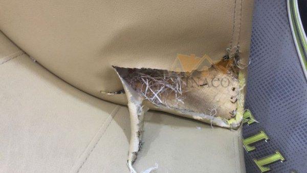 Một góc ghế bị chó cắn lộ ra các sợi dệt nilon bao tải