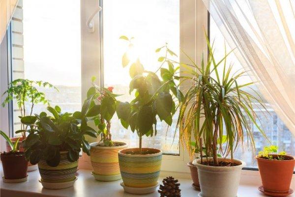 Tạo nên một khu vườn nhỏ với các chậu cây khác nhau