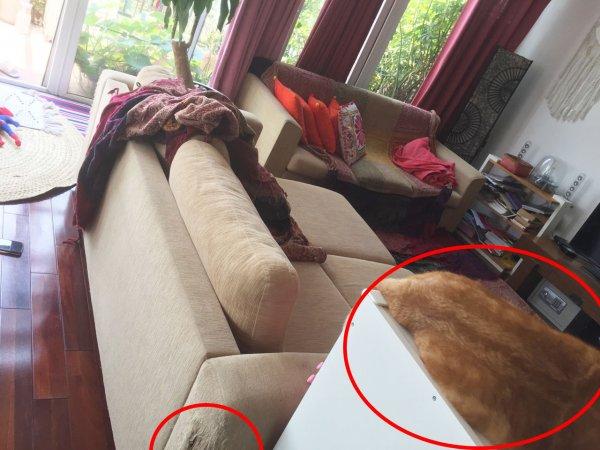 Phần ghế sofa bị mèo cào rách