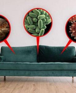 Những vi khuẩn trụ ngụ làm tổ trên ghế sofa