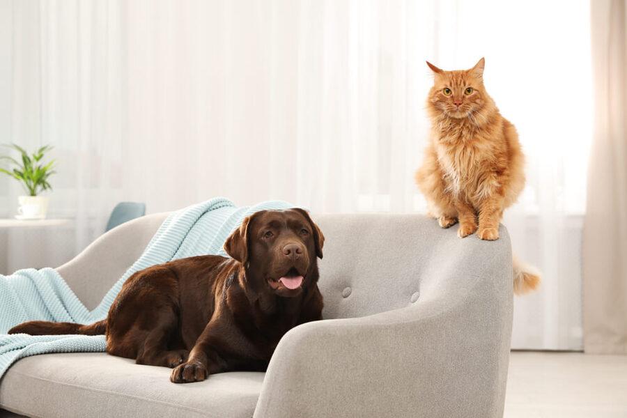 Bạn nên huấn luyện những thú cưng của bạn ngay từ nhỏ với những điều bạn đặt ra cho chúng