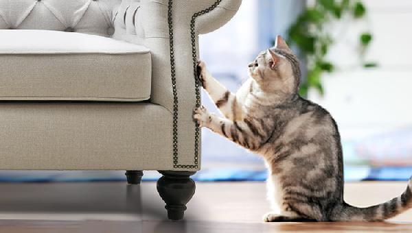 Đánh dấu lãnh thổ của mèo bằng hành động cào ghế sofa
