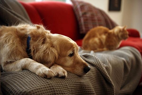 """Nuôi thú cưng- Làm thế nào """"ngăn chặn"""" cào rách ghế sofa?"""
