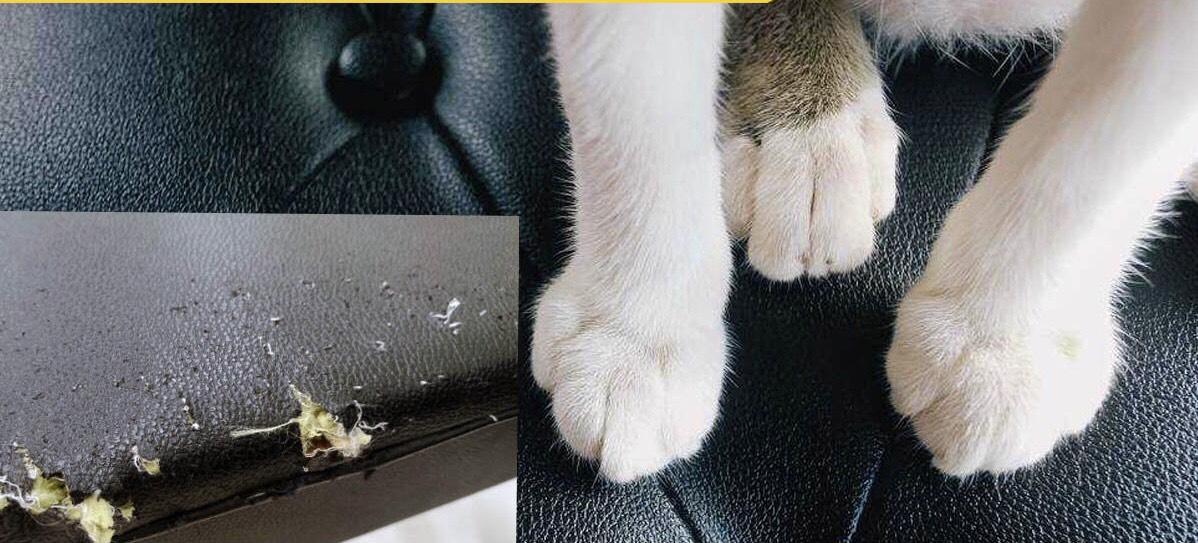 Xử lý sofa da thật bị mèo cào mang lại hiệu quả cao, bạn nên thử điều này!